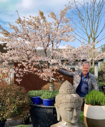 kirschbaum pflanzen