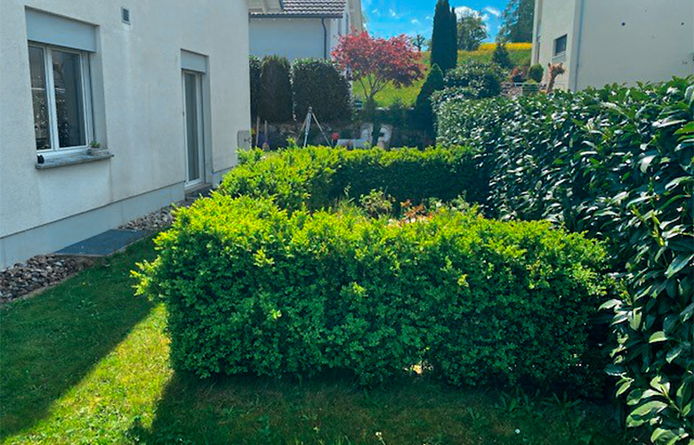 Gartenrenovation – Vorher