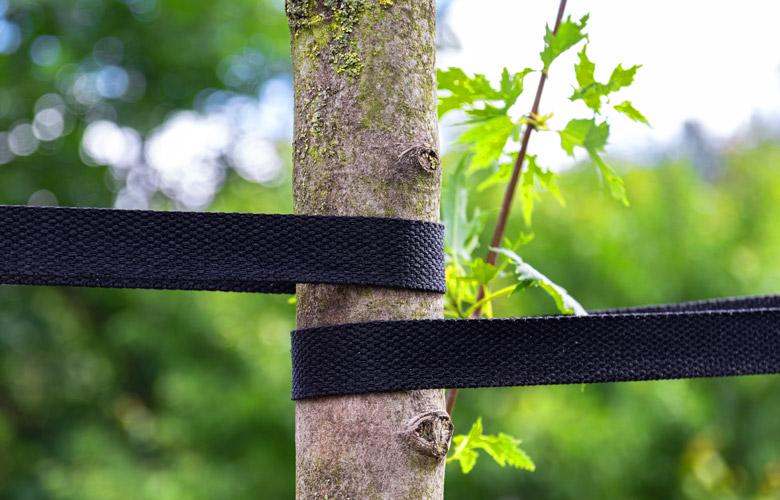 Befestigung des Baumes mit Bändern