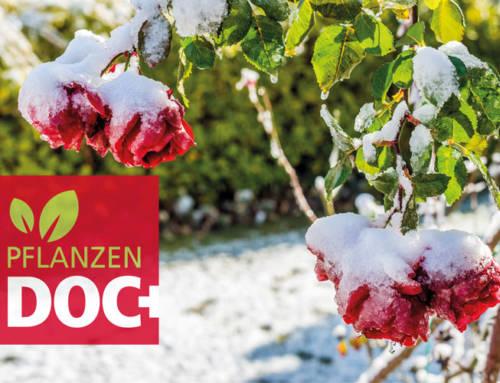 Pflanzeneinwinterung: So kommen Ihre Pflanzen sicher über den Winter