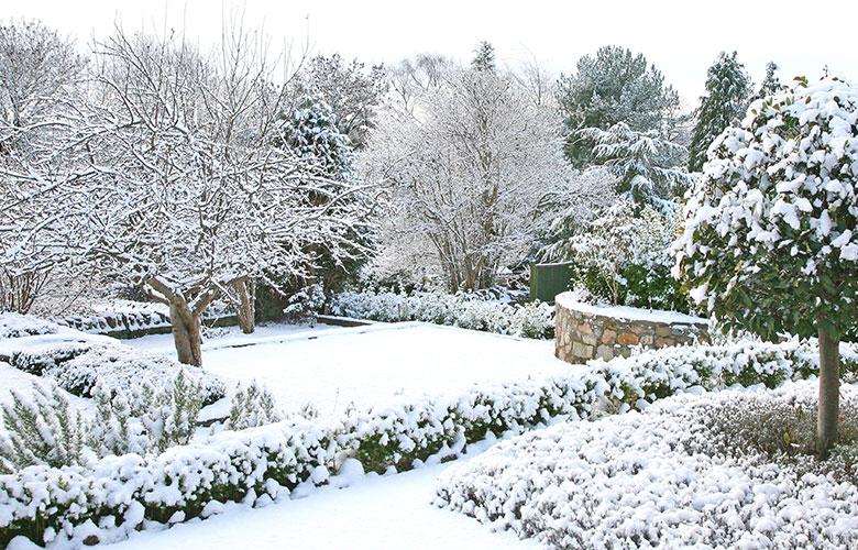 Ein schneebedeckter Garten