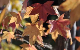 Herbstapéro