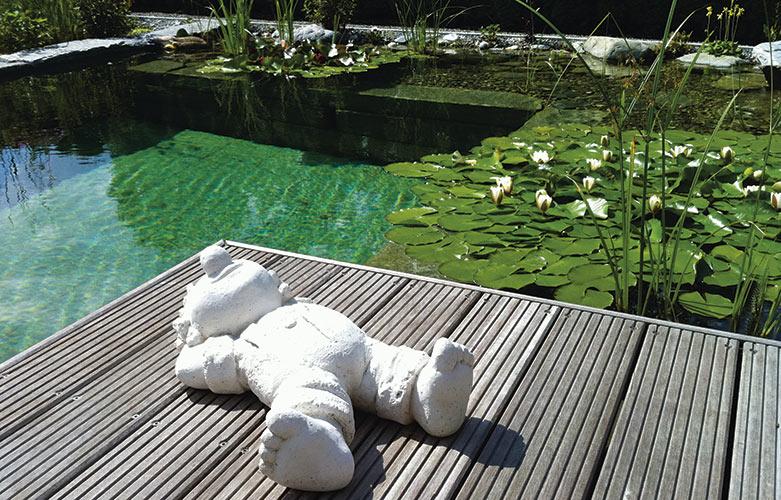Schwimmteich Frühjahrspflege